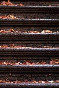 Herfst trap